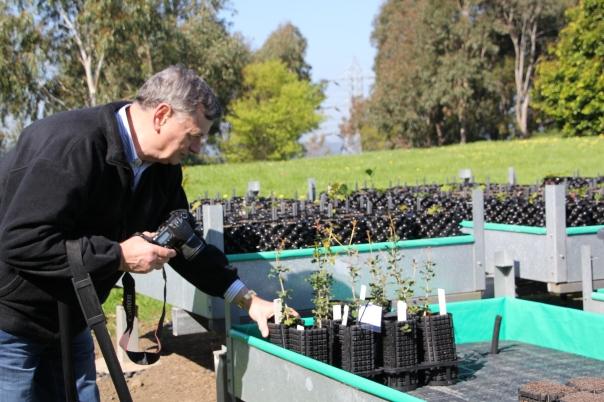 2012 seedlings at nursery