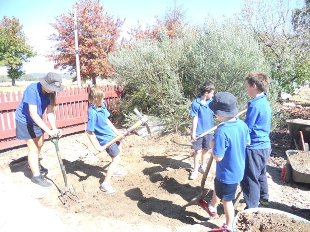 Wooragee Primary School students Anna Piko, Jess Knoth, Hamish Leslie, Heath Leslie and Mark Knoth preparing a site for their Gallipoli Oak.